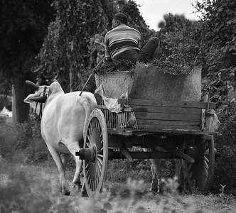 MYA_2625-Ox Cart-B&W