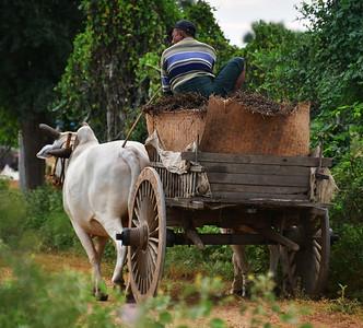 MYA_2625-Ox Cart