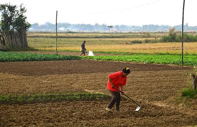 MYA_3943-Working the fields