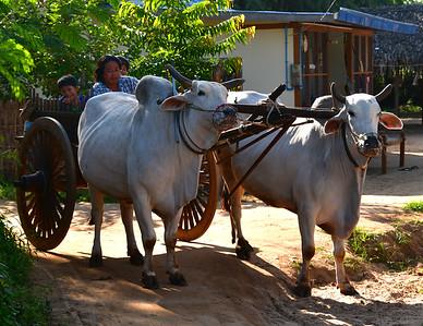 MYA_2667-Ox Cart