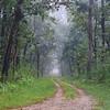 NET_0112-7x5-Foggy Lane