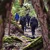 NEP_2612-7x5-Trekking thru Forest