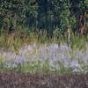 NET_0281-7x5-Safari Grass