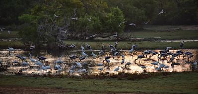 SRI_0201-Birds-morning feeding