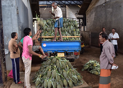 SRI_1371-7x5-Unloading Pineapples
