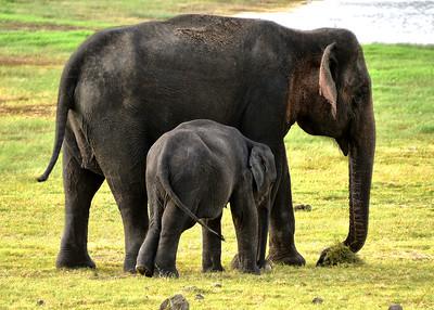 NEA_1240-7x5-Elephant-Baby