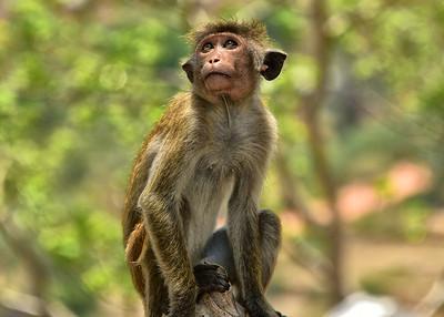 NEA_0588-7x5-Monkey