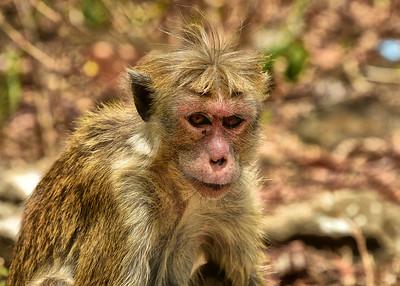 NEA_0492-7x5-Monkey