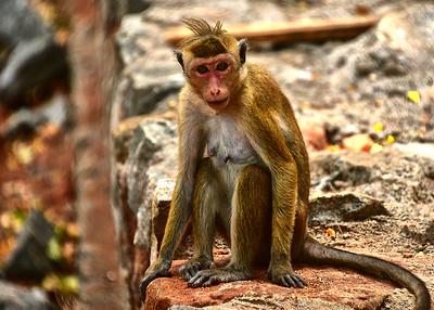 NEA_1172-7x5-Monkey