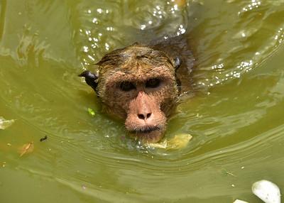 NEA_0634-7x5-Monkey Face