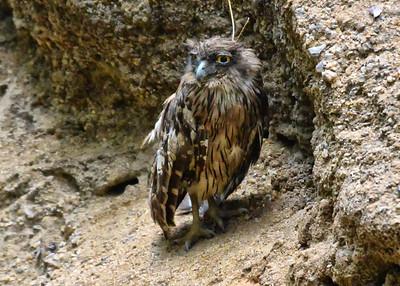 NEA_0793-7x5-Eagle