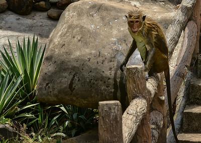 NEA_0618-7x5-monkey