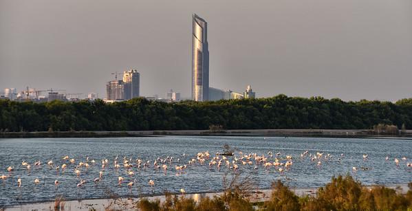 SRI_3564-Flamingos-Towers-Dubai