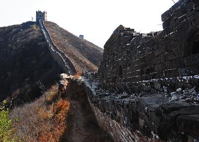 NEA_1303-7x5-Wild Wall