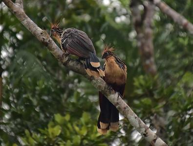 ECQ_0721-Birds