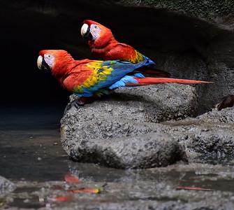 ECQ_1701-Parrots