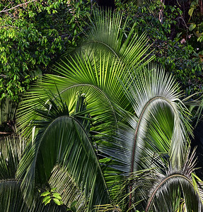 ECQ_0970-Palms