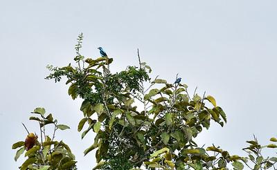 ECQ_1138-Birds