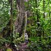 ECQ_0759-Kapoc Tree