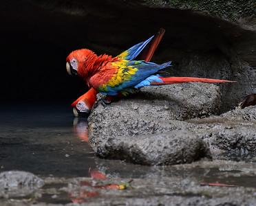 ECQ_1698-Parrots