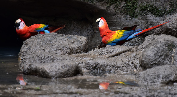 ECQ_1713-Parrots