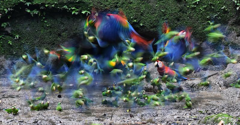 ECQ_2010-Birds in Flight
