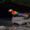 ECQ_1682-Parrot