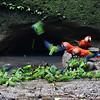 ECQ_2001-Parrots