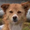 ECQ_0551-7x5-Dog