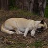 ECQ_0198-Lazy Dog