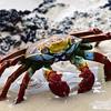 ECQ_4106-Crab