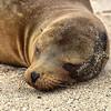 ECQ_2673-Sea Lion