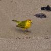 ECQ_4037-Bird