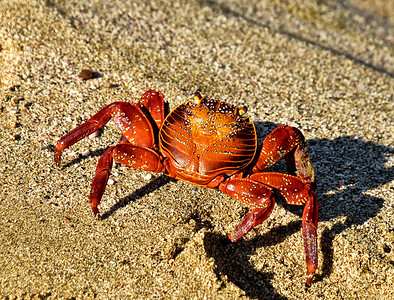ECQ_2910-Crab
