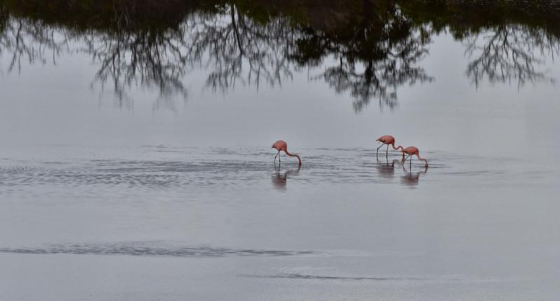 ECQ_4068-Flamingos