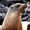 ECQ_2682-Sea Lion