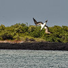 ECQ_4146-Blue Footed Booby