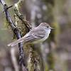 ECQ_4406-Bird