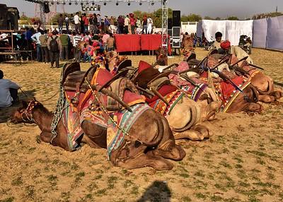 IND_0806-7x5-Camels