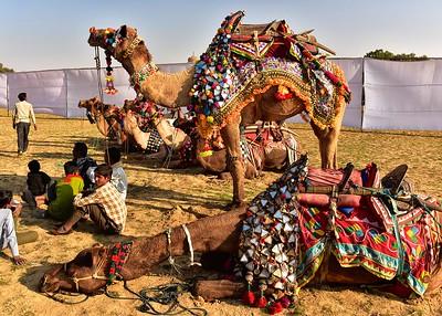 IND_0805-7x5-Camel Festival