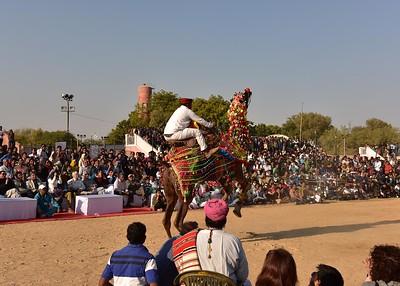 IND_0838-7x5-Camel dance