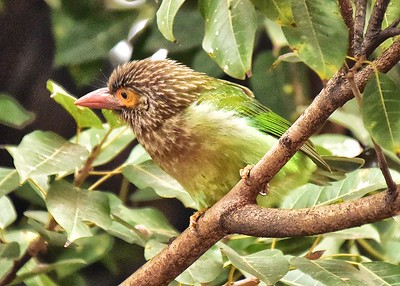 IND_0226-7x5-Bird