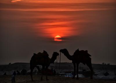 IND_1799-7x5-Camel sunset