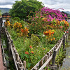 MYA_4822-Hotel Garden