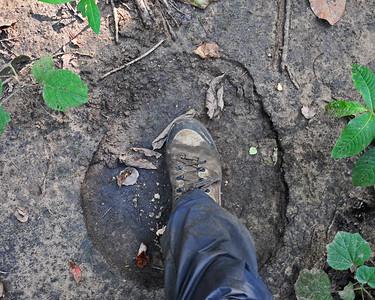 Wild Elephant Foot Print