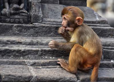 NEP_3884-7x5-Monkey