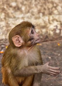 NEP_3921-5x7-Monkey
