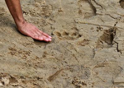 NET_0121-7x5-Tiger Track
