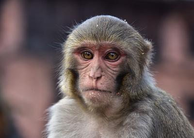 NEP_3888-7x5-Monkey