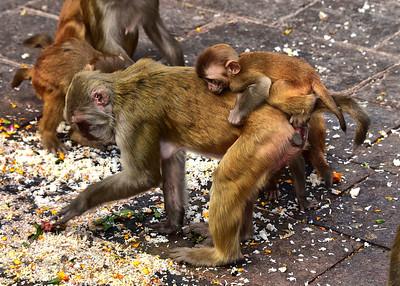 NEP_3879-7x5-monkey-Baby